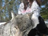 northwestontariowolfhunts