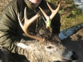 northwest_ontario_deer_28