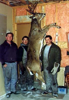 deer14-jpg