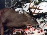 deer8-jpg