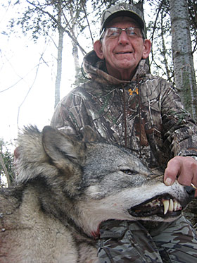 Northern Ontario Timber Wolf Hunt